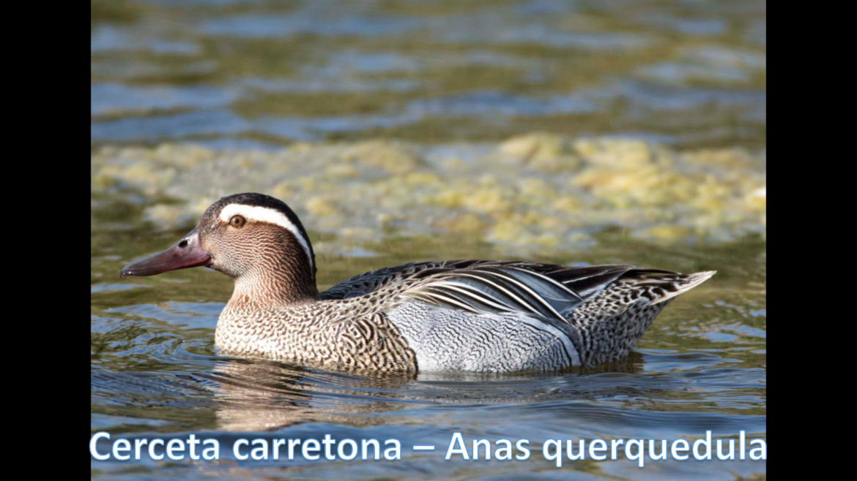 Especies El Oso _Página_09